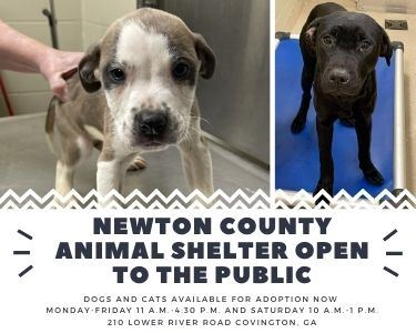 Image of Newton County Animal Services Shelter Open